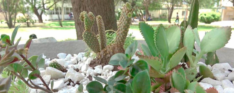 Mi Propio Jardín